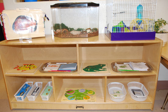 montessori math rationale essay