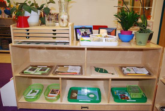 Dsc 0075 Jpg Botany Shelf